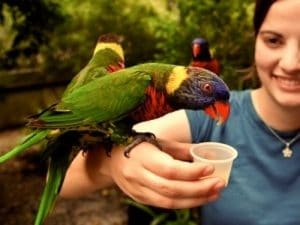 reconversion pro animaux