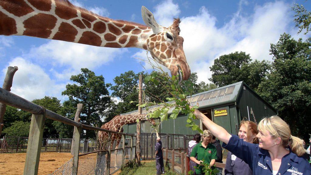 Comment travailler dans un zoo en 2020 – 7 formations courtes