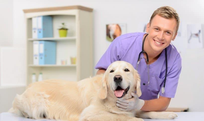 salaire veterinaire