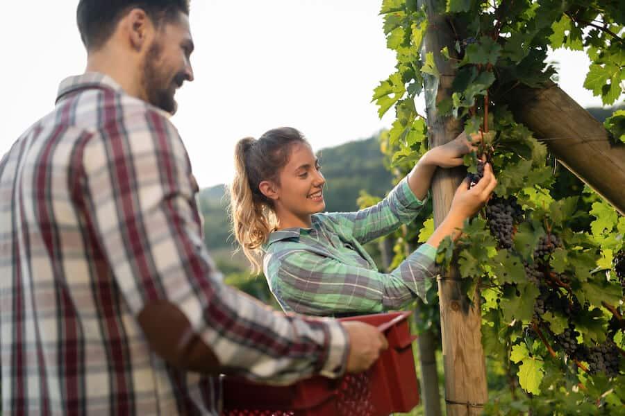 viticulteur