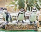 Devenir zoologiste | Fiche métier