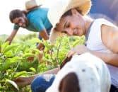Devenir horticulteur | Fiche métier