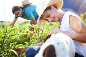 metier horticulteur