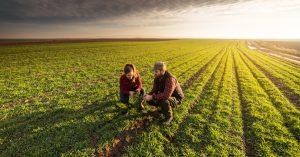 Champs agricole
