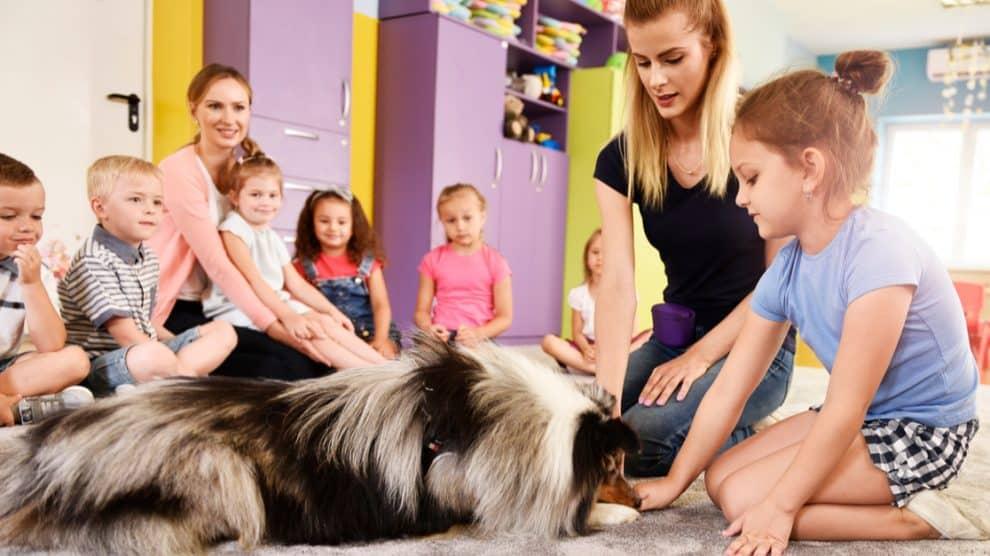 Education d'un chien