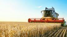 Camion qui récolte du blé