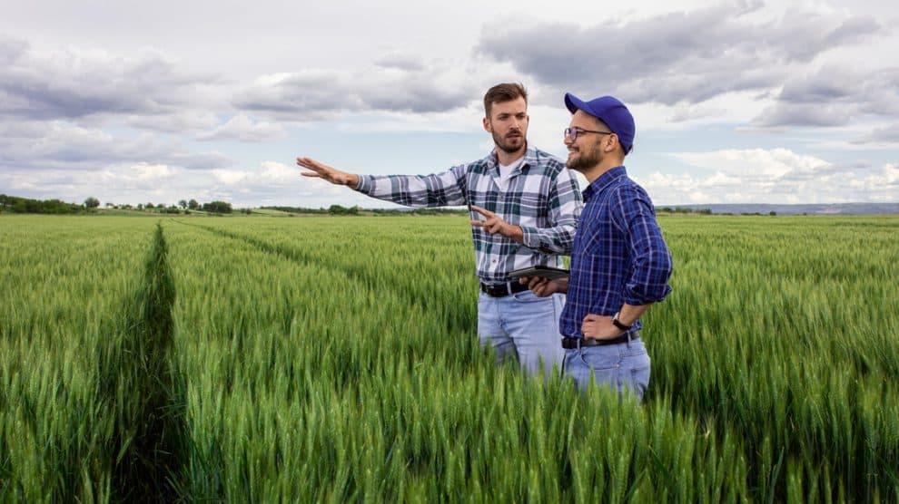 Conseil d'un agriculteur dans un champ