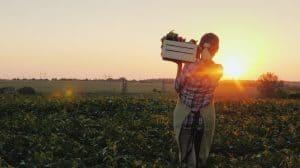 Récolte dans un champ